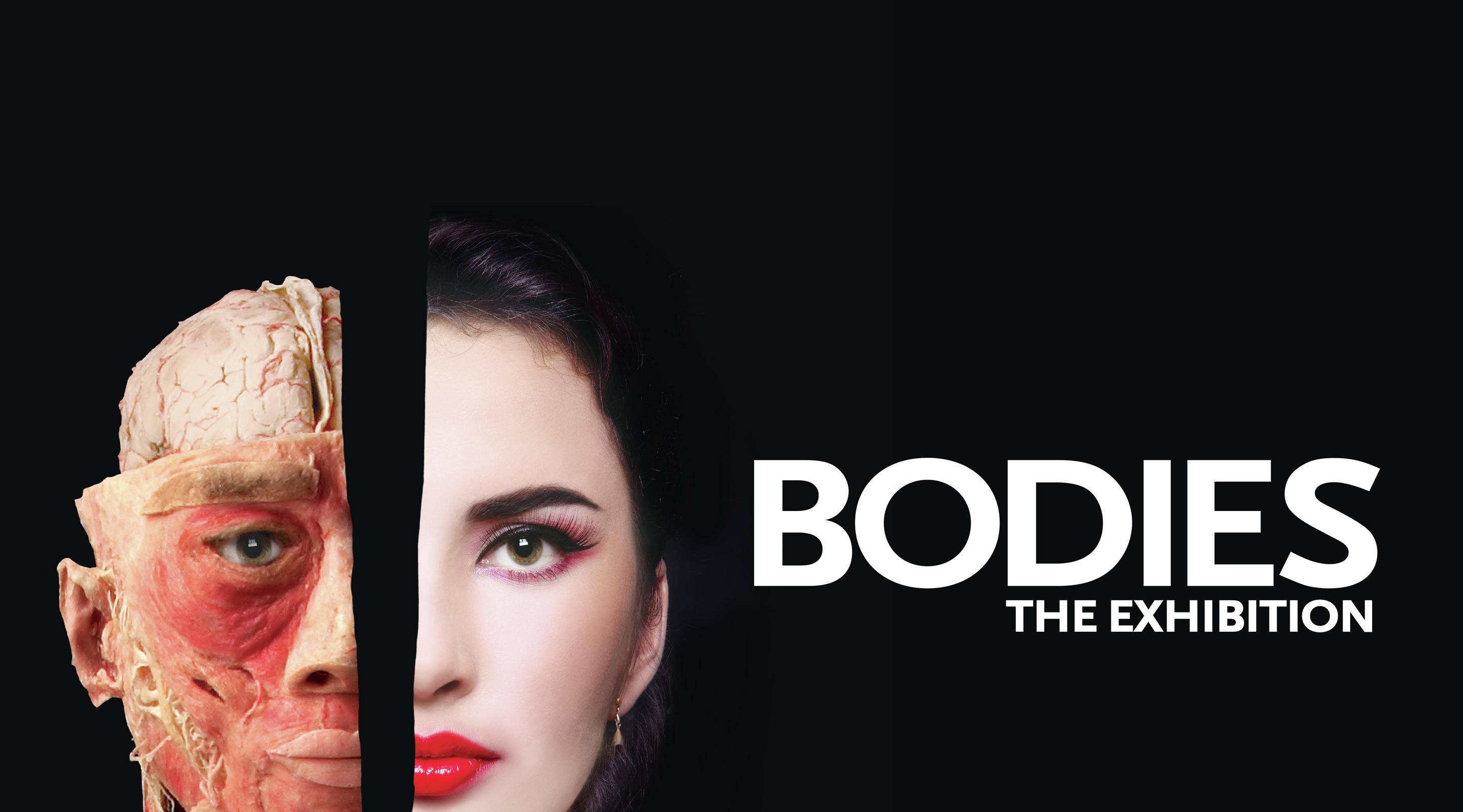 Essay on bodies the exhibition
